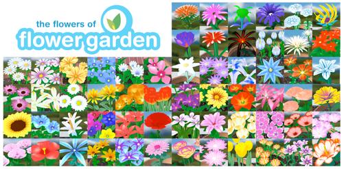 flower-garden-flowers