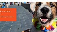 Lumia Storyteller ganha uma grande atualização e novos features