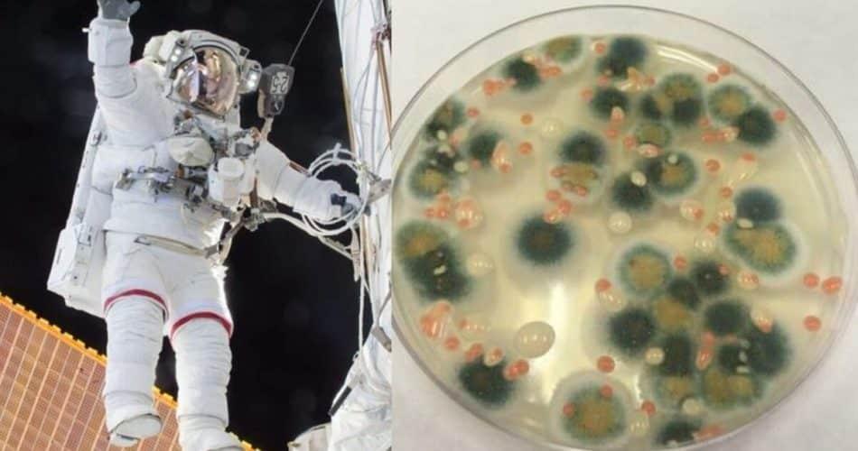 Fungo nascido do desastre de Chernobly pode ajudar em viagens no espaço