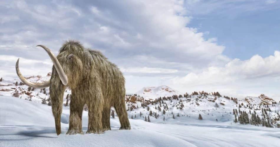 Cientistas dizem que podem trazer de volta mamutes lanosos. Mas talvez eles não devessem